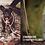 Thumbnail: TAULEINE STEEL
