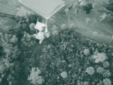 aerial-green WEB.jpg