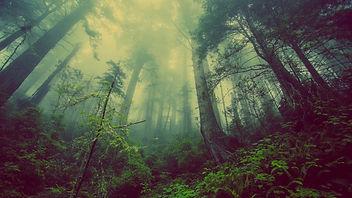 forest-931706 2.jpg