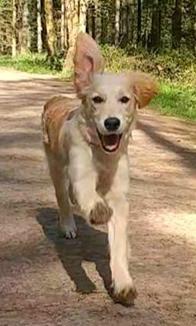 Hello! I'm Devon and I'm a golden retriever puppy 🐾