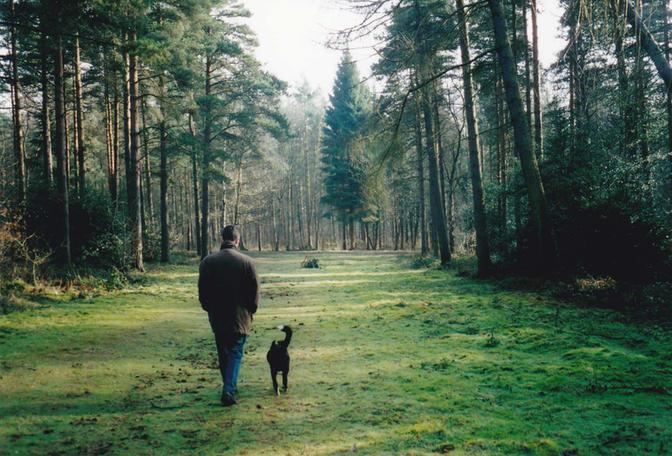 Blakeshall Wood