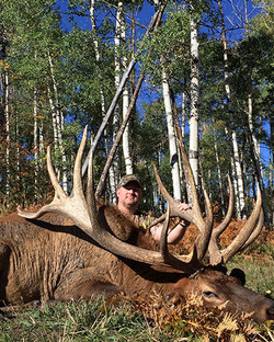 """Trophy Bull  //  Up to 400"""" package"""
