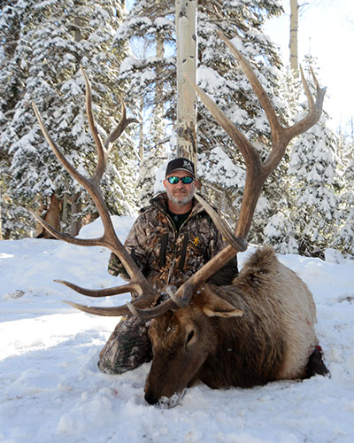 "Trophy Bull  //  Up to 400"" package"