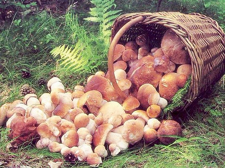 Mushrooms, typical compound of the Czech cuisine