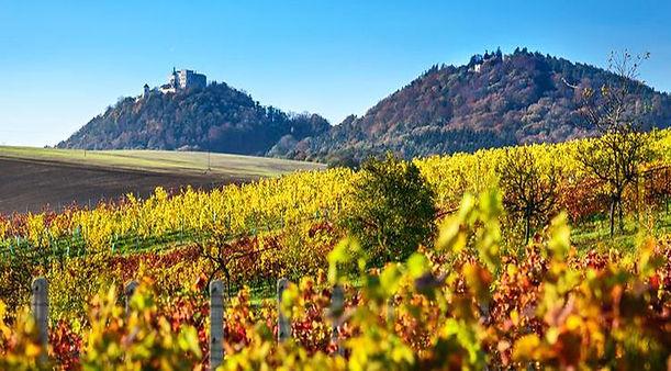 Autumn in vineyards around Buchlov castle (South Moravia), Czechia
