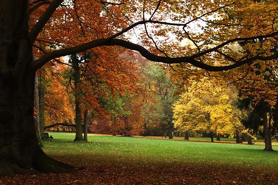Autumn in Stromovka park, Prague, Czechia