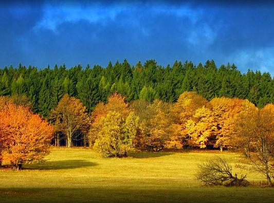 Autumn in Jeseníky mountains (North Moravia), Czechia