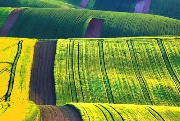 Moravian fields in the spring, Czechia