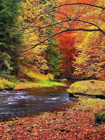 Kamenice creek  (North Bohemia), Czechia