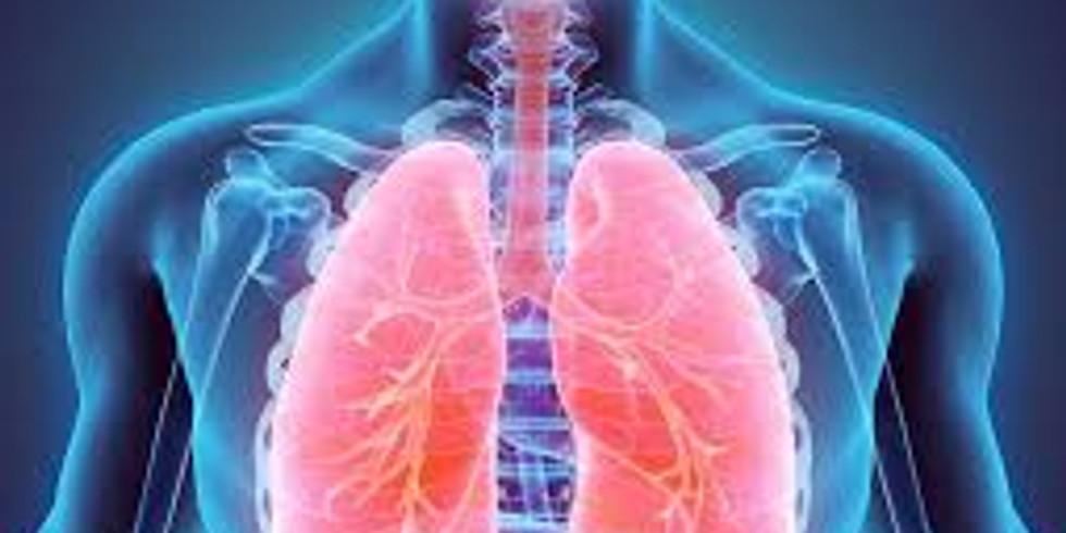 Respiratory System - 8CEUs