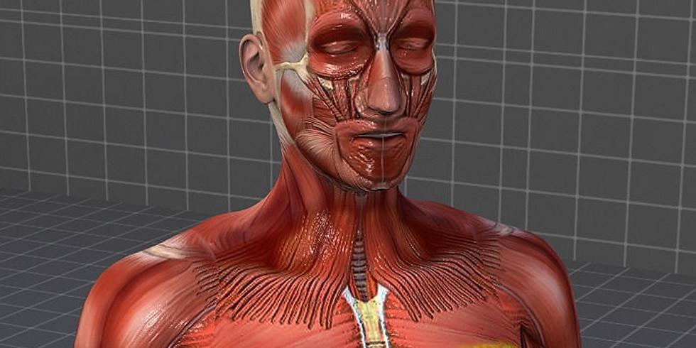 Reflex-OIL-ogy™ Muscular System