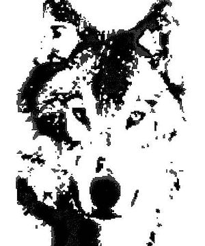Wolf Black & White - large (3).jpg