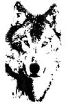 Wolf Black & White - large.jpg