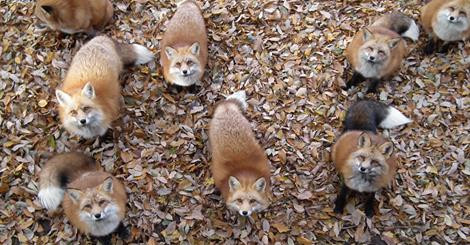 Outnumbered and Outfoxed