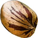 Pecan Icon.png