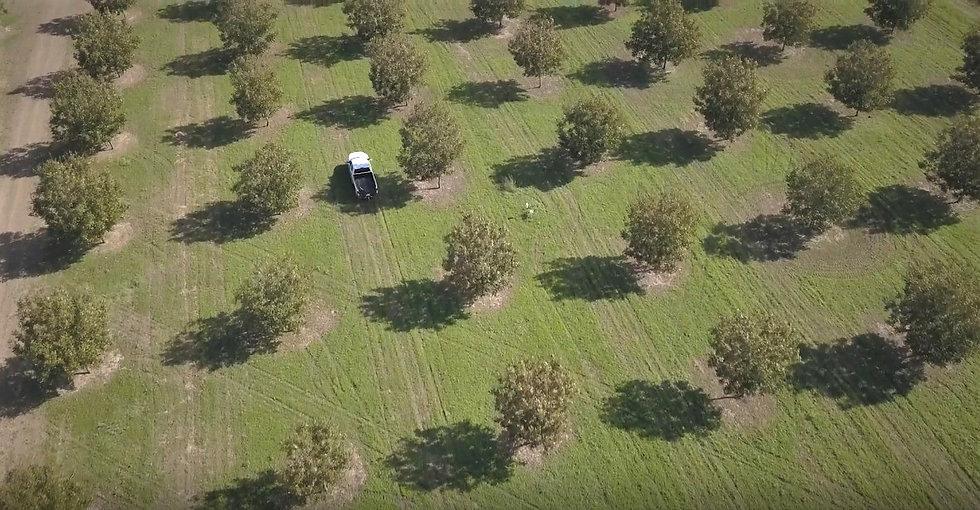 Screenshot_2019-06-20 Pecan Harvesting a