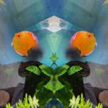 Mirrored world - Aquarium