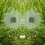 Mirrored world - In the eye of the dandelion