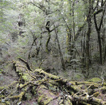 Forest branches