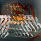 Crabs digital deformation 3