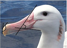 Project_Bird beak-1.JPG