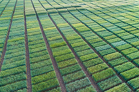 Aerial image of agricultural test plots