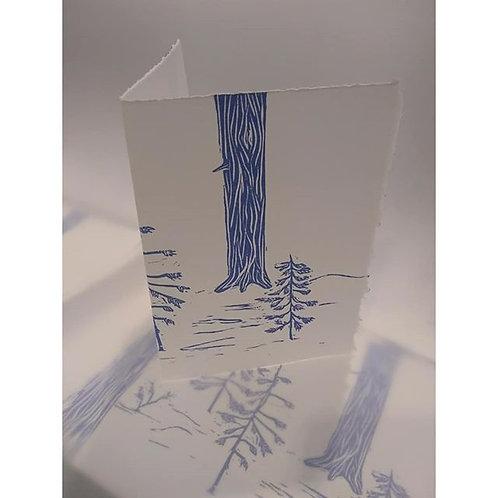Colorado Pines Card
