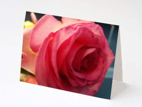 Pink Rose Note Card