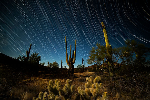 Saguaro Cactus, star trails, astrophotography