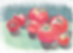 201007tomato.png