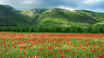 nature-in-bulgaria-2.jpg