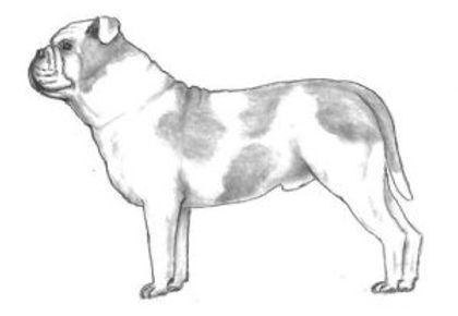breedstandard-300x207.jpg