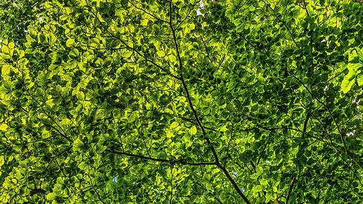 canopy-2552954_1920.jpg
