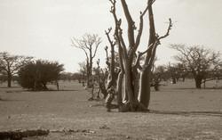 Afrika00210_edited