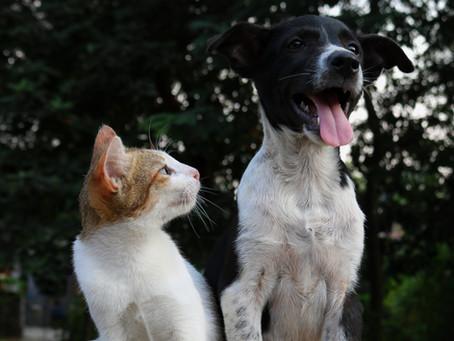 Un vétérinaire peut-il exercer, être associé et gérant dans plusieurs structures ?