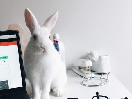 L' e-santé et l'exercice vétérinaire