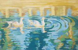Patos de la laguna