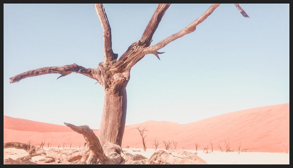 Trees in Deadvlei