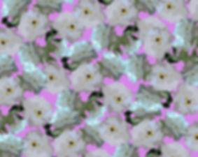 roses for website.jpg