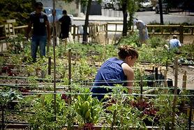 Wikimedia_huertos_urbanos_comunitarios-1