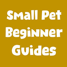small pet beginner guides.jpg
