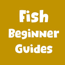 fish beginner guides tile.jpg
