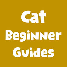 cat beginner guides.jpg