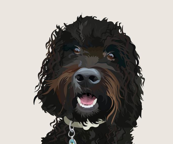 pet portrait colours-07.png