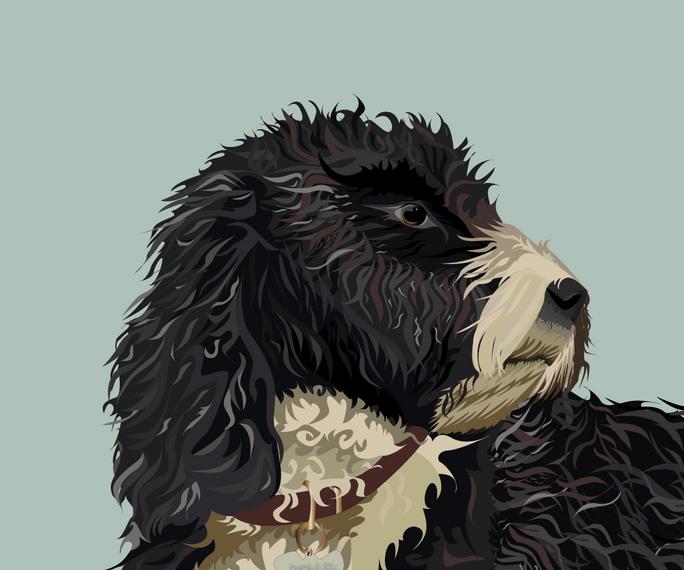 pet portrait colours-12.png
