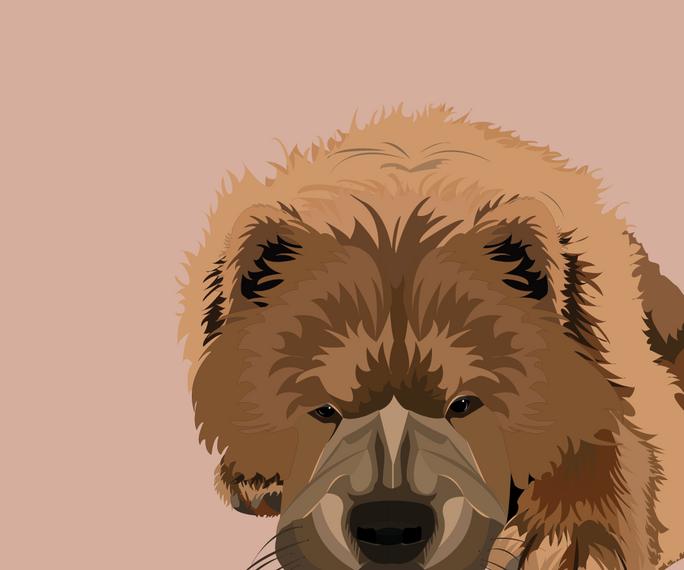 pet portrait colours-02.png