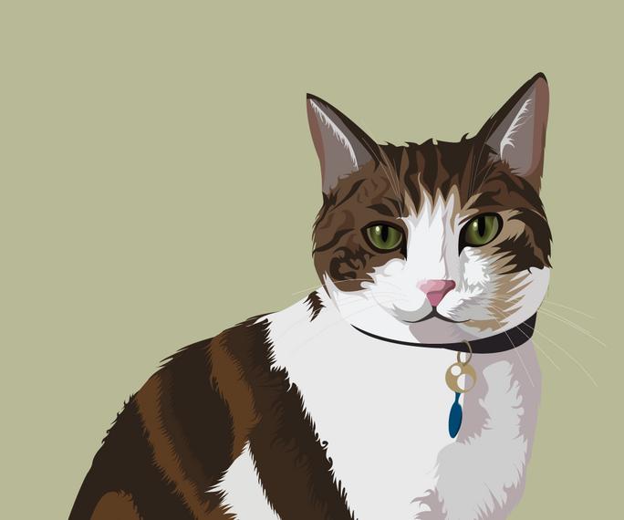 pet portrait colours-18.png