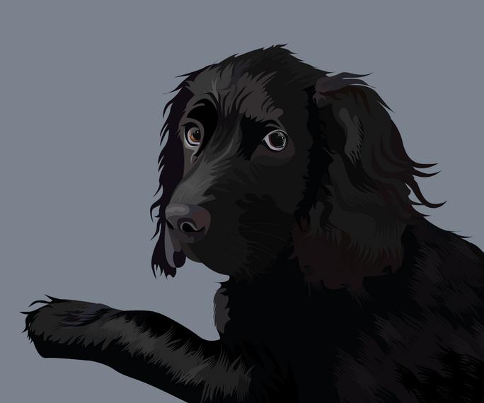 pet portrait colours-14.png