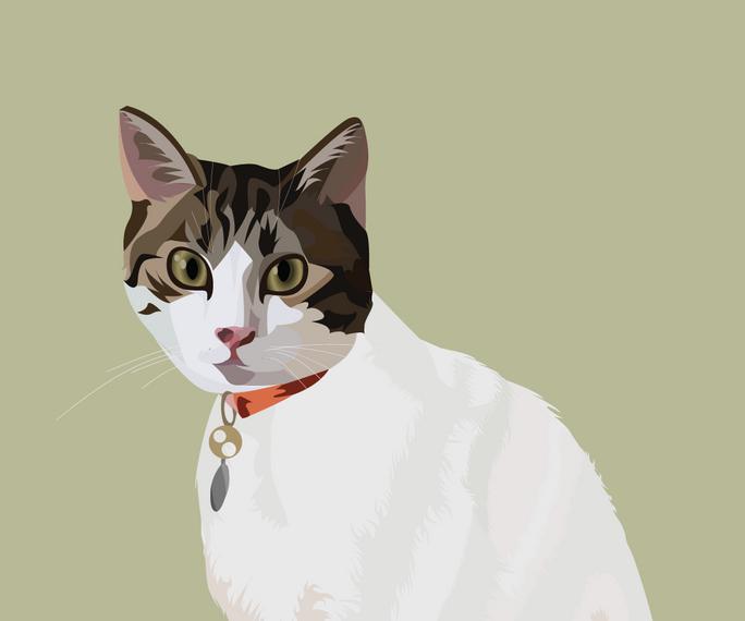 pet portrait colours-17.png
