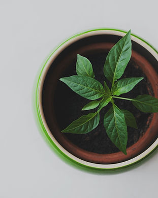 Plant%20in%20a%20Pot_edited.jpg